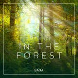 Ambience - In the Forest - undefined
